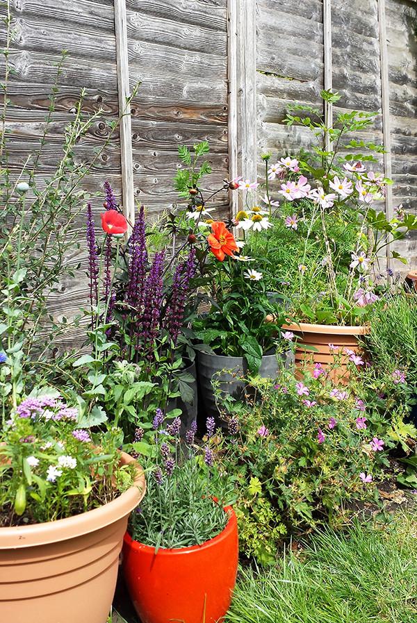 Sarah Rees Garden Blog Pic 240 colourful flowers.jpg