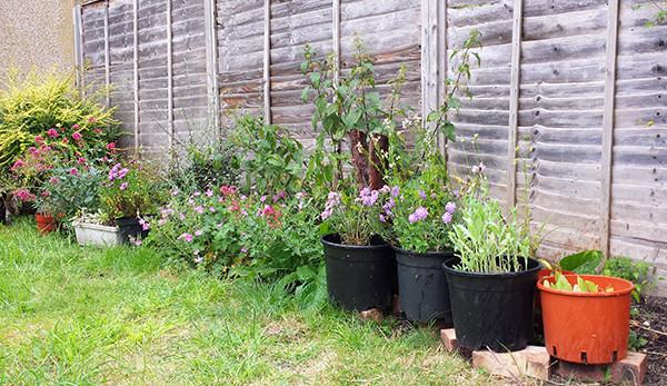 Sarah Rees Garden Blog Pic 130 pots into border.jpg