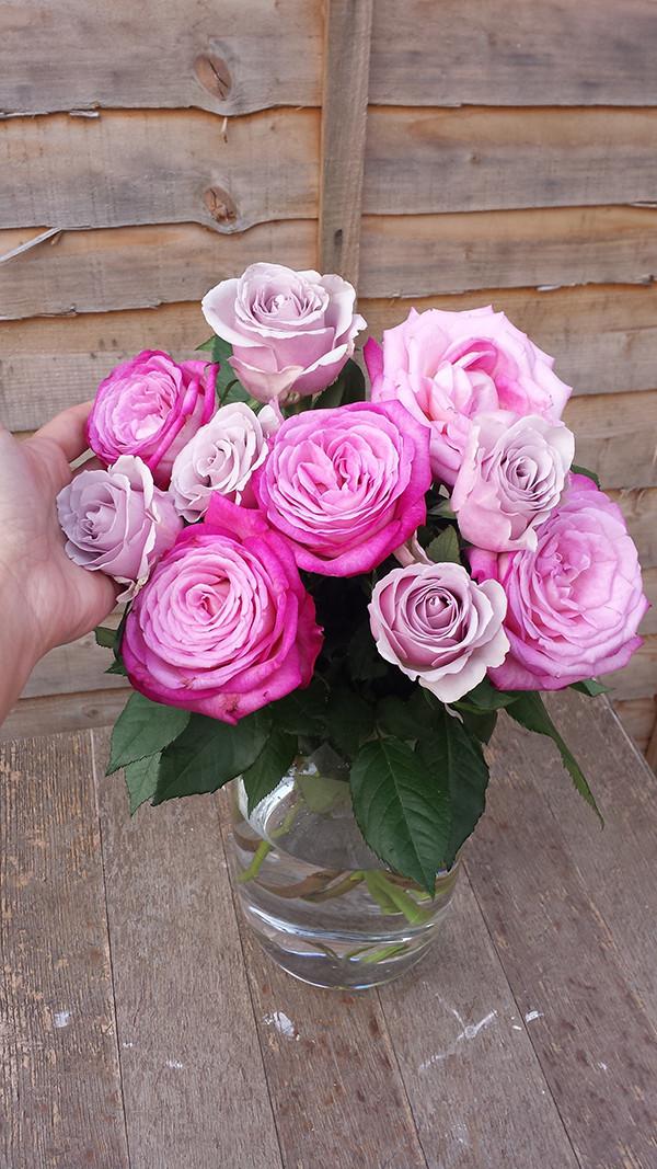 Sarah Rees Garden Blog Pic 224 roses.jpg