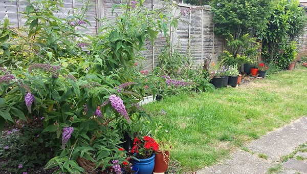 Sarah Rees Garden Blog Pic 139 summer garden.jpg