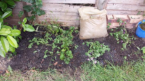 Sarah Rees Garden Blog Pic 175 weed patch.jpg