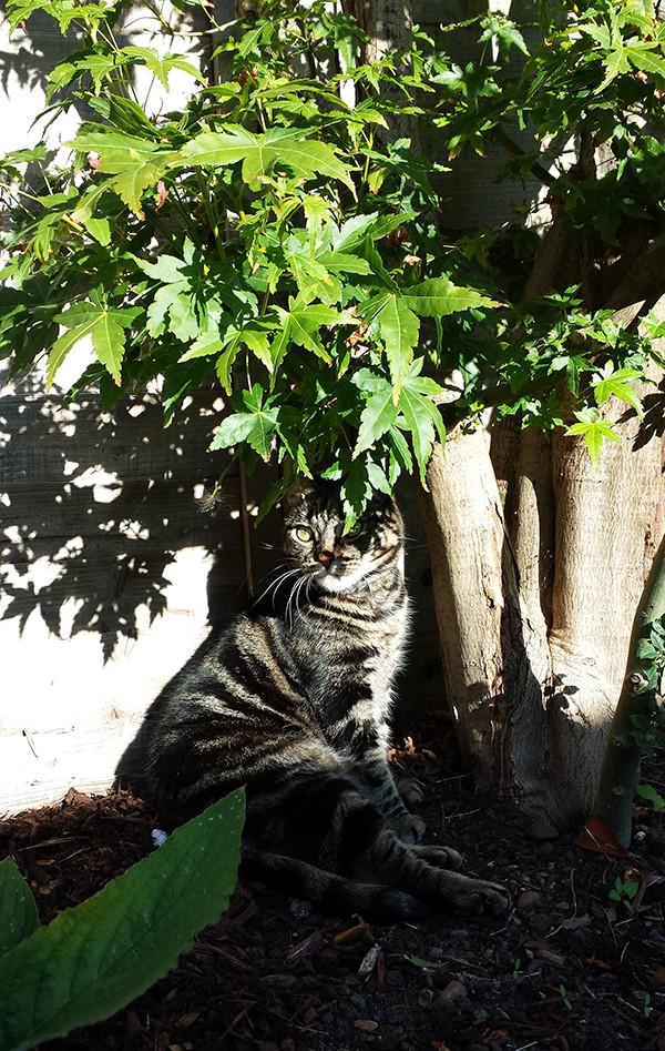 Sarah Rees Garden Blog Pic 270 cat under her tree.jpg