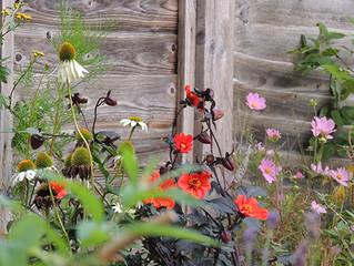 Still flowering into sunny September