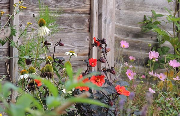 Sarah Rees Garden Blog Pic 283.JPG