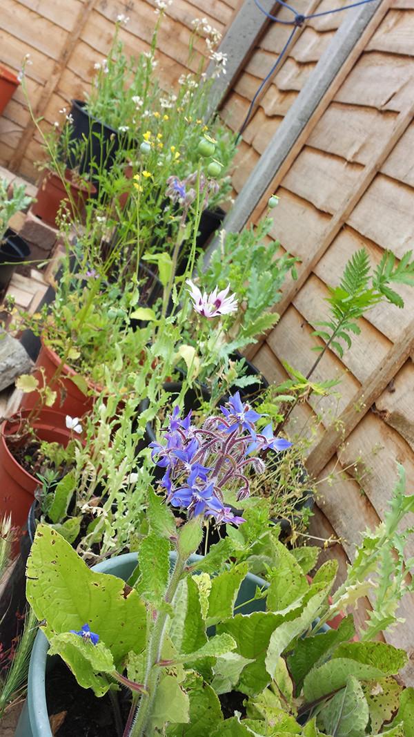 Sarah Rees Garden Blog Pic 123 saving dry flowers.jpg