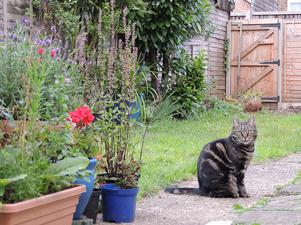 Sarah Rees Garden Blog Pic 212 cat.JPG