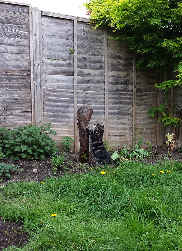 Sarah Rees Garden Blog Pic 63 scratching post.jpg