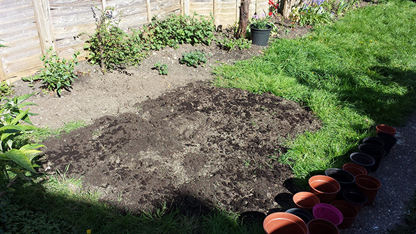 Sarah Rees Garden Blog Pic 51 preparing lawn.jpg