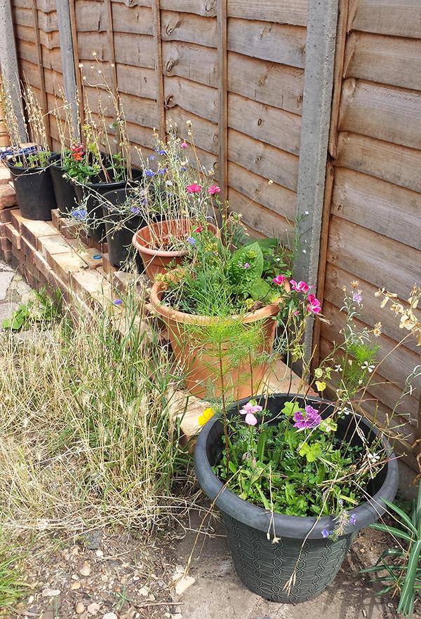 Sarah Rees Garden Blog Pic 280.jpg
