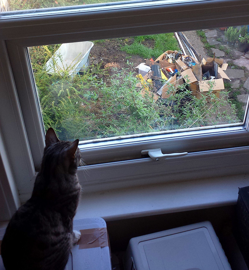 Sarah Rees Garden Blog Pic 12 cat watches.jpg