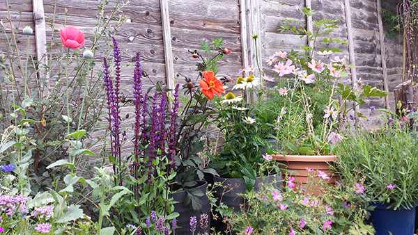 Sarah Rees Garden Blog Pic 193 border ablaze with colour.jpg