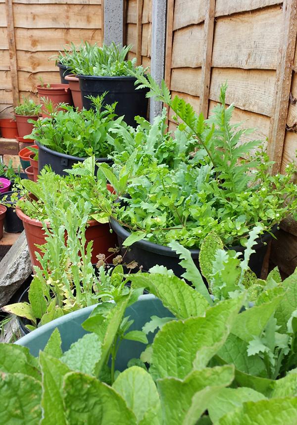 Sarah Rees Garden blog pic 100 wildflower seedlings.jpg