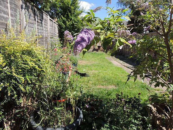 Sarah Rees Garden Blog Pic 226 garden view.JPG