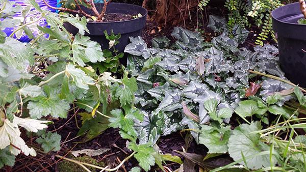 Sarah Rees Garden Blog Pic 325.jpg