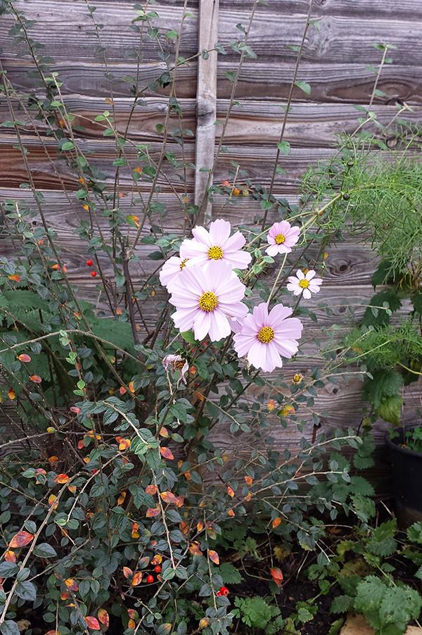 Sarah Rees Garden Blog Pic 315.jpg