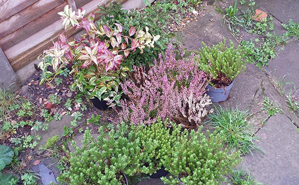Sarah Rees Garden Blog Pic 297.jpg
