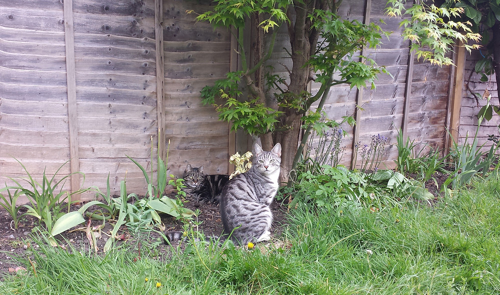 Sarah Rees Garden Blog Pic 66 cat supervision.jpg