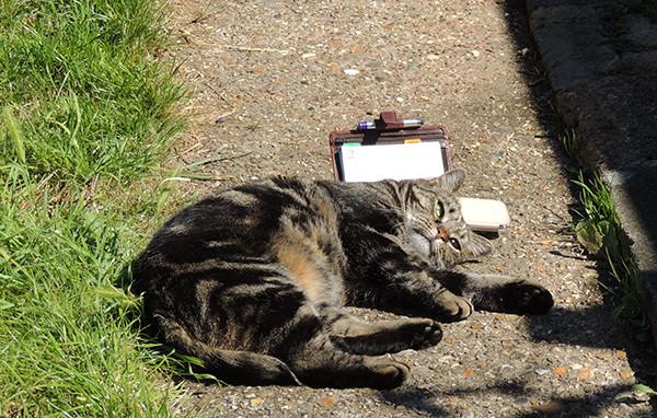 Sarah Rees Garden Blog Pic 227 cat sunbathe.jpg