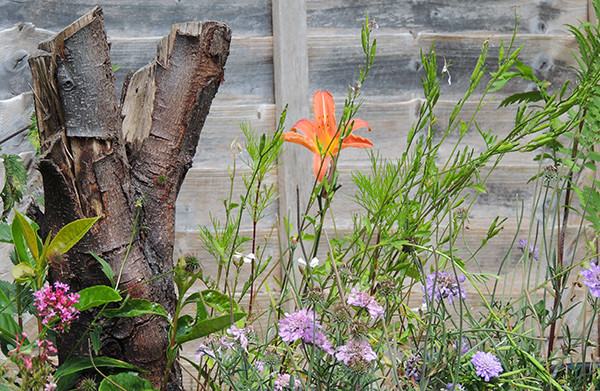 Sarah Rees Garden Blog Pic 149 lily and tree stump.JPG