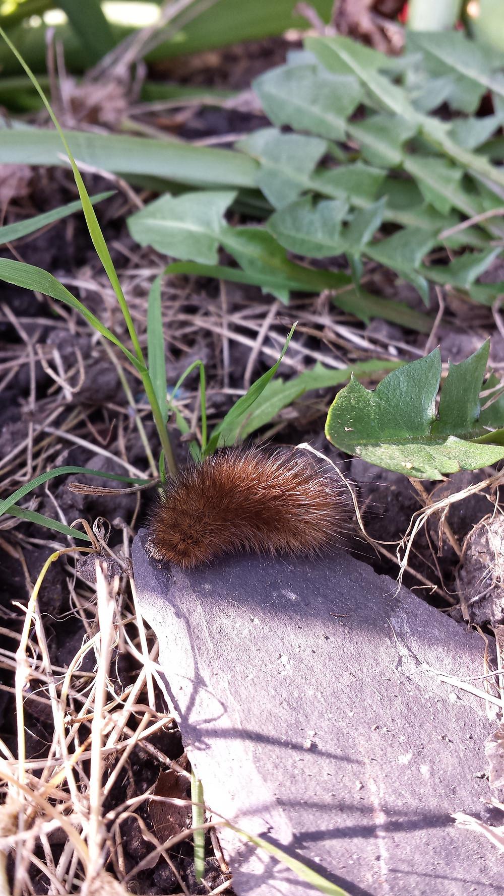 Sarah Rees Garden Blog Pic 16 Caterpillar.jpg