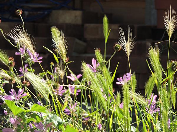 Sarah Rees Garden Blog Pic 223 grasses.JPG