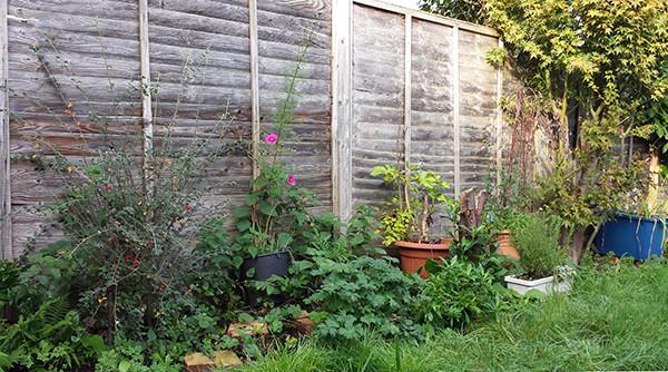 Sarah Rees Garden Blog Pic 309.jpg