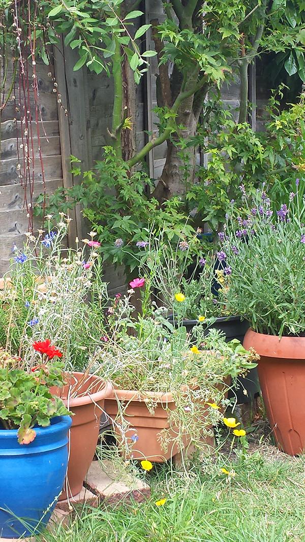 Sarah Rees Garden Blog Pic 244 border blooms.jpg