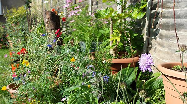 Sarah Rees Garden Blog Pic 232 flowers.jpg