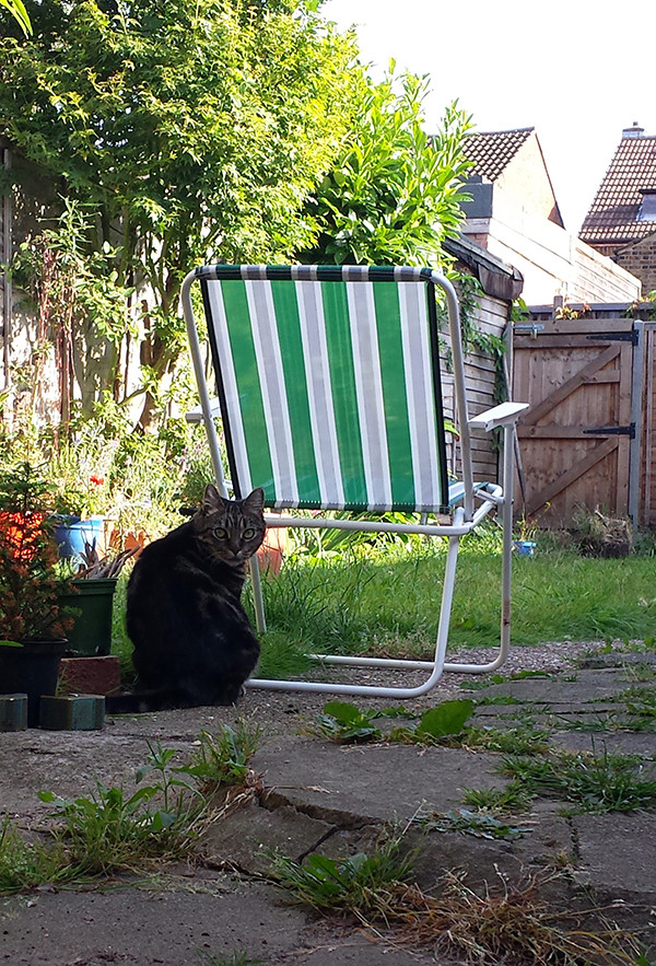 Sarah Rees Garden Blog Pic 263 my garden chair.jpg