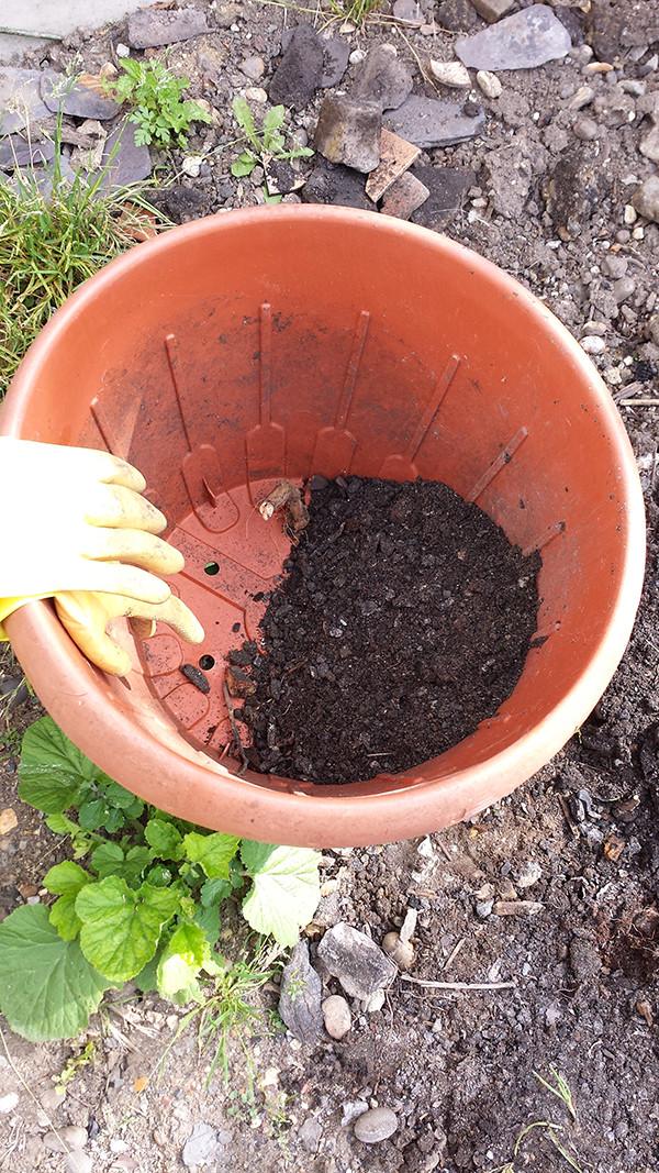 Sarah Rees Garden Blog Pic 172 cleaning soil.jpg