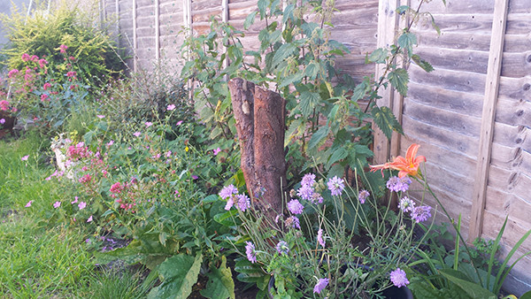 Sarah Rees Garden Blog Pic 121 lily and scabious.jpg