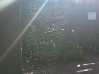 Sunflare Spiderweb