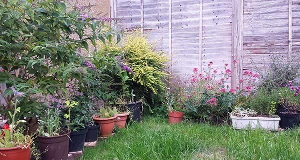 Sarah Rees Garden Blog Pic 136 pots into border.jpg