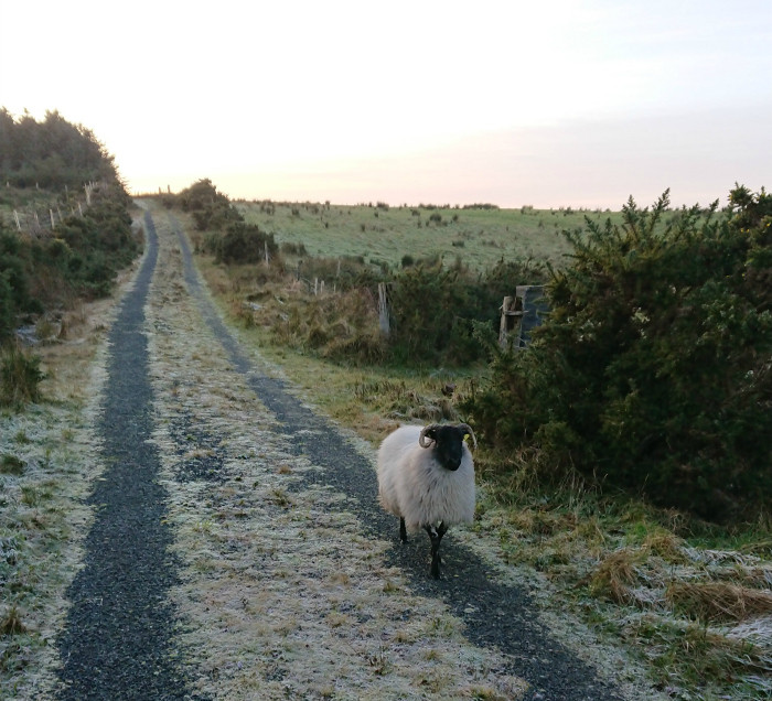west of ireland photo in the frost
