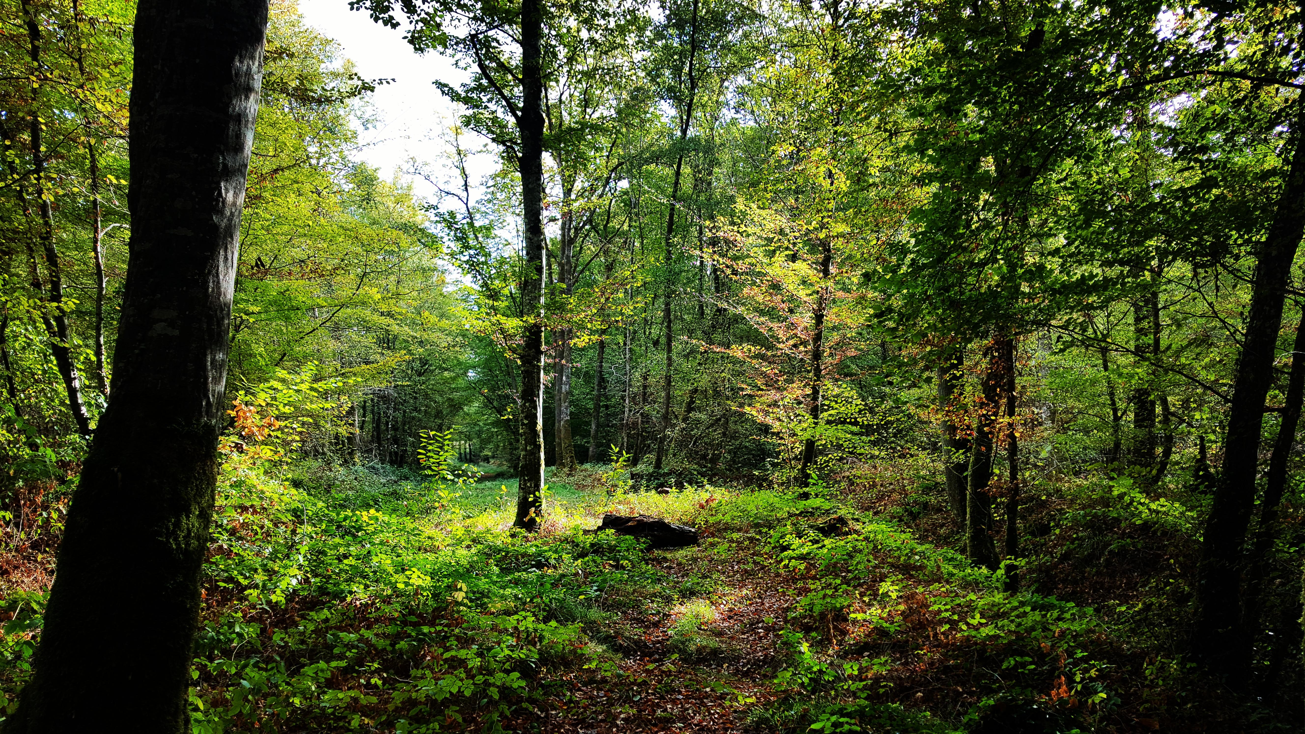 Nature Loire