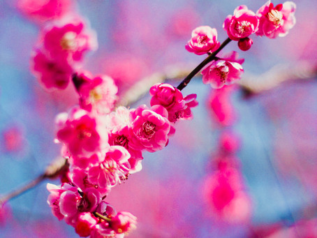 Spring is the Season of Renewal