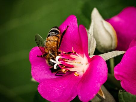 Enjoy Spring Reduce Allergy Symptoms