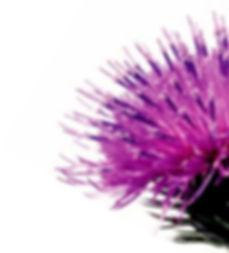 Thistle Logo 13102015.jpg