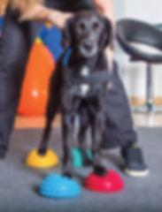 pet-health-Photo-by-MS-Grafixx.jpg