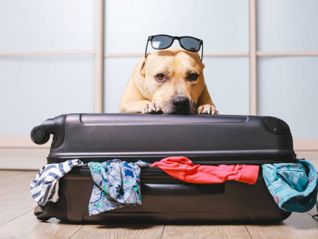Travels with your dog(s) – The ultimate packing guide