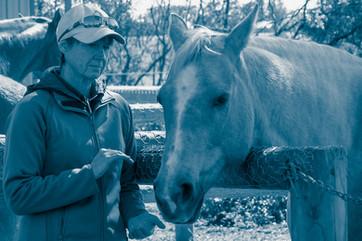 equine reiki session