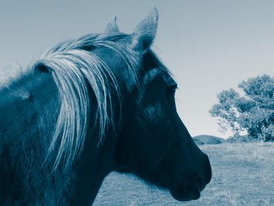 Rosie_the equine reiki practitioner