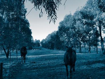 Equine Facilitators Rosie + Donna