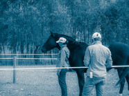 Equine experiential learning_round pen