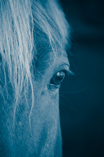 Horse sees you