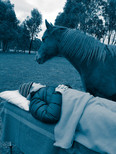 Reiki session for people with horses