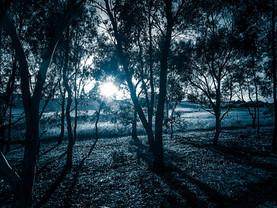 Sunrise Ashby Grove Beechworth