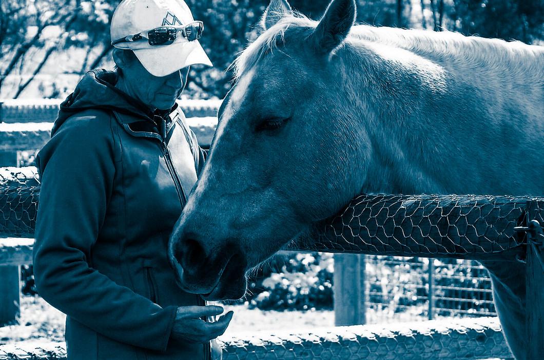 Equine Reiki hands off