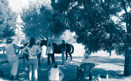 equine reiki training_scanning chakras