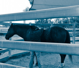 equine reiki training hands on